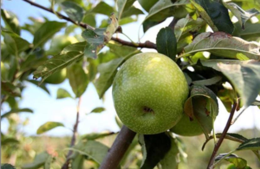 Offre gastronomique (Torroella de Montgrí – L'Estartit) – Septembre 2019
